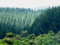 Luonnon vaikutukset hyvinvointiin
