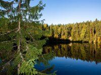 Metsien suojelu on jokaisen yhteinen vastuu